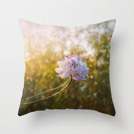 Knautia arvensis Throw Pillow