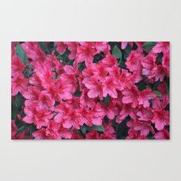 A Shade Of Pink Canvas Print