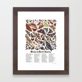 Moths of North America Framed Art Print