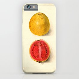 Vintage Botanical Guava iPhone Case