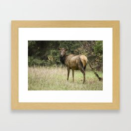 Female Wapiti Framed Art Print