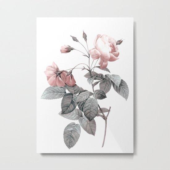 Rose 2 Metal Print