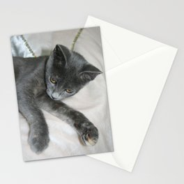 Cute Grey Kitten Relaxing  Stationery Cards