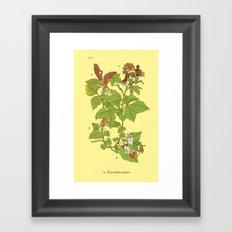 Toxicodendron radicans Framed Art Print