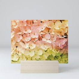 Delicate Pastel Multicolor Hydrangea Mini Art Print