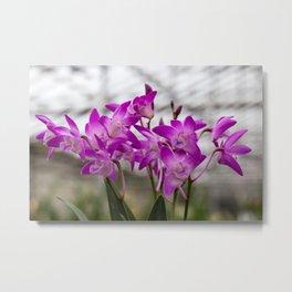 Orchid Sea Weed Metal Print