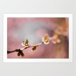 Buds on a Tree with Bokeh Art Print