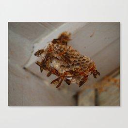 wasp nest Canvas Print