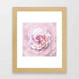 Pink Rose Beauty Framed Art Print