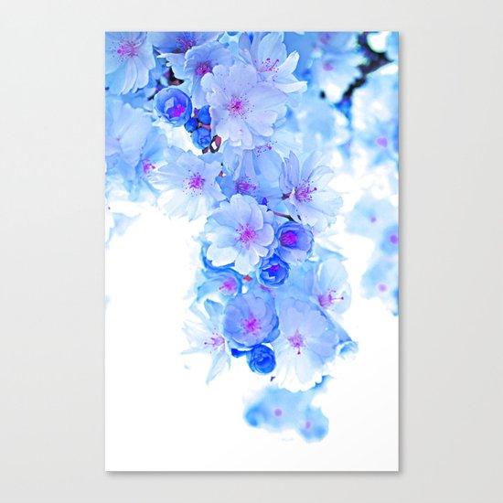 Cherry Blossom.Blue Canvas Print