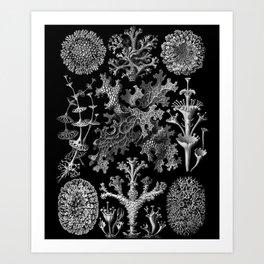 Lichens(Lichenes) by Ernst Haeckel Art Print
