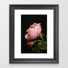 Weeping Rose II Framed Art Print