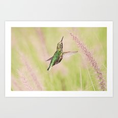 Little Hummer Art Print