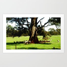Under the shade of a Gum Tree Art Print