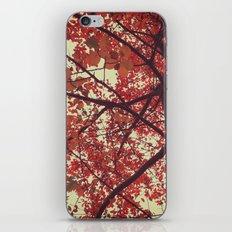 color of the season iPhone & iPod Skin