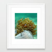 nemo Framed Art Prints featuring Nemo by Anika Wilson