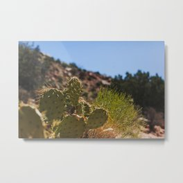 Cactus on a Hill Metal Print