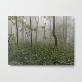 Smoky Mountain Summer Forest II - National Park Nature Photography Metal Print