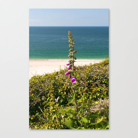 Foxglove On The Beach Canvas Print