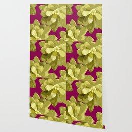 Succulent Plants On A Burgundy Background #decor #buyart #society6 Wallpaper