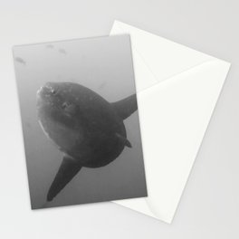 Mola mola sunfish in B&W Stationery Cards
