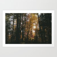 Pine Park. Art Print