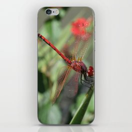 Red Skimmer or Firecracker Dragonfly iPhone Skin