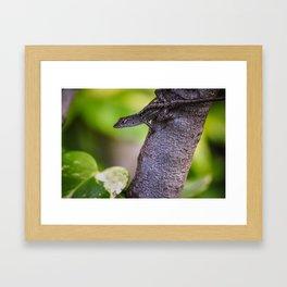 Brown Anole Lizard Framed Art Print