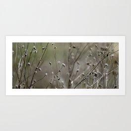 Wild Heather Art Print
