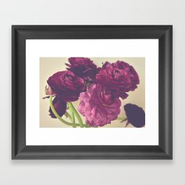 Romantic Ranunculus Framed Art Print