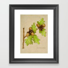 Quercus Robur Framed Art Print