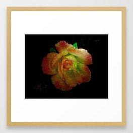 A Beautiful Rose Framed Art Print