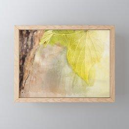 Leaf on tree under sunlight Framed Mini Art Print