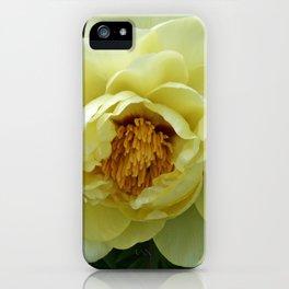 Tokyo Hama Rikyuu Koen Rose 3 iPhone Case