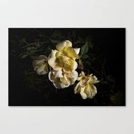 Wilted flowers Canvas Print