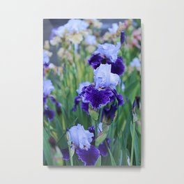 Purple Flags Metal Print