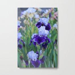 Purple Flags Metal Print