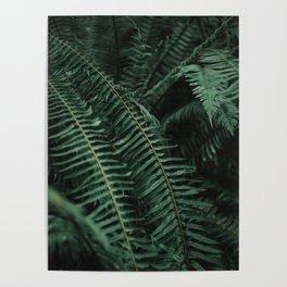 Forest Ferns Poster