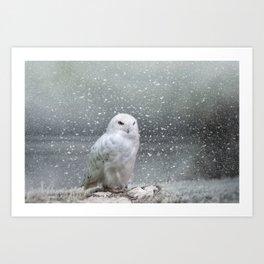 Snowy Owl Kunstdrucke