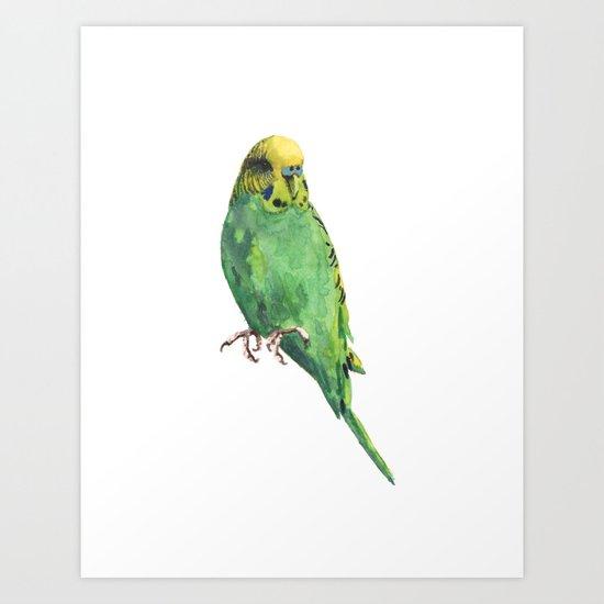 Budgie, parakeet, budgerigar,bird art, budgie painting Art Print