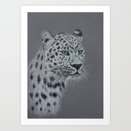 Portrait of a snow leopard on gray background Art Print