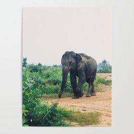 Elephant in Udawalawe National Park, Sri Lanka Poster
