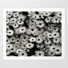 daisy, black & white Art Print