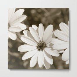 Monochrome Daisy Metal Print