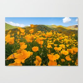 Wide angle view of orange poppies at Walker Canyon in Southern California during the super bloom Canvas Print