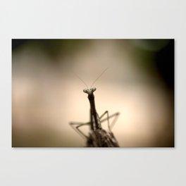 Praying mantis Canvas Print