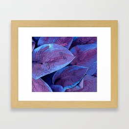 Hosta Purple Pantone 2018 Framed Art Print