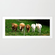 Cows on the field Art Print