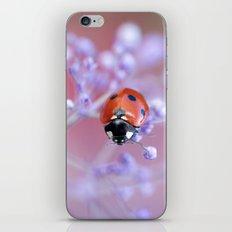 Spring pop iPhone & iPod Skin