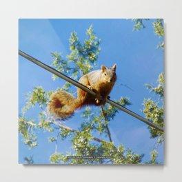 Jeronimo Rubio Photography | Peanut the Squirrel (2) High Wire Dance Metal Print